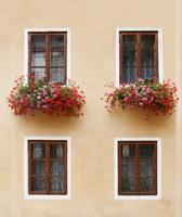 窓に花が飾られたエクステリア