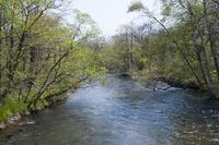 新緑の釧路川