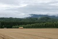 麦ロールと雲霧
