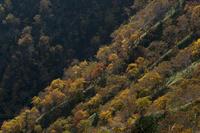 摩周湖内壁の紅葉