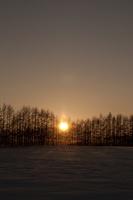 落葉松並木の夕景