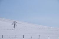 冬の900草原