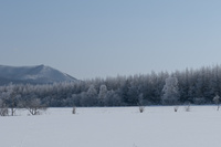 樹氷の木々