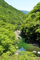 奈良県 新緑の天ノ川