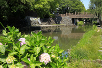 滋賀県 新緑の八幡掘めぐり