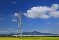 秋の田園を走る新幹線 10669001862  写真素材・ストックフォト・画像・イラスト素材 アマナイメージズ