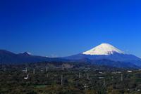 湘南平からの富士山 10669002032  写真素材・ストックフォト・画像・イラスト素材 アマナイメージズ