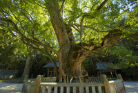 しまなみ海道の大山祇神社