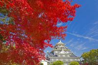秋の岡山城