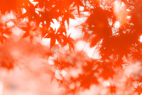 後楽園にて紅葉