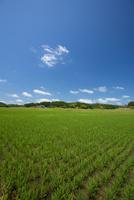 田植え後の田園風景