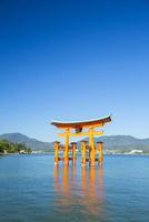 宮島の大鳥居 10685001733| 写真素材・ストックフォト・画像・イラスト素材|アマナイメージズ