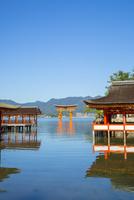 厳島神社回廊と大鳥居