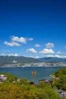 厳島神社の全景