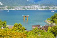 厳島神社の全景 10685001786| 写真素材・ストックフォト・画像・イラスト素材|アマナイメージズ