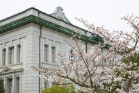 江田島旧海軍兵学校の春