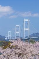 桜と来島海峡大橋