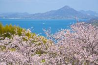 春のしまなみ海道 10685002523| 写真素材・ストックフォト・画像・イラスト素材|アマナイメージズ