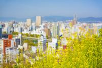 比治山公園より広島市 10685002555| 写真素材・ストックフォト・画像・イラスト素材|アマナイメージズ