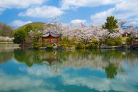 桜咲く庄原上野公園 10685002571| 写真素材・ストックフォト・画像・イラスト素材|アマナイメージズ