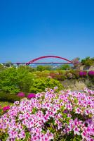 ツツジと第二音戸大橋 10685002604| 写真素材・ストックフォト・画像・イラスト素材|アマナイメージズ