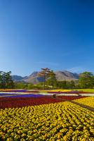 春のくじゅう花公園 10685002629| 写真素材・ストックフォト・画像・イラスト素材|アマナイメージズ