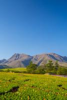 春のくじゅう花公園 10685002641| 写真素材・ストックフォト・画像・イラスト素材|アマナイメージズ
