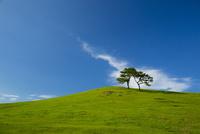 青空と丘の木