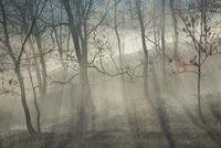 阿蘇野焼き後の樹木と朝の光