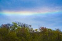 新緑と虹色の空