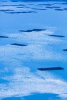 虫明湾のカキイカダ