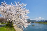桜萩八景遊覧船 10685003508| 写真素材・ストックフォト・画像・イラスト素材|アマナイメージズ