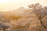 吉田松陰誕生地より指月山と萩の町並み