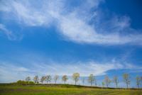 草原の並木と空 10685003596| 写真素材・ストックフォト・画像・イラスト素材|アマナイメージズ