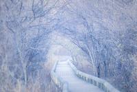 白いトンネルの遊歩道