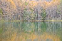 晩秋の雑木林と御射鹿池