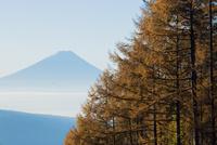 八ヶ岳高原ラインより朝霧の富士山