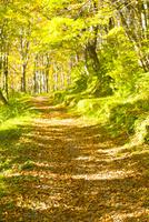 落葉の山道