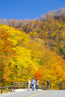 大山環状道路と大山国有林の紅葉
