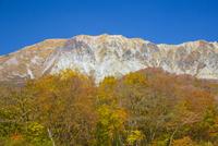 大山国有林の紅葉と大山南壁の断崖