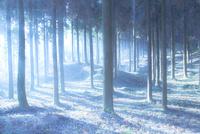 霧の森にさし込む陽の光
