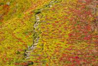 紅葉する池ノ段の登山道