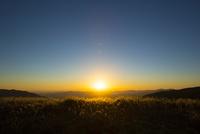 夕日に映えるススキと山並み