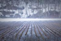 早春の田園と雪どけの森