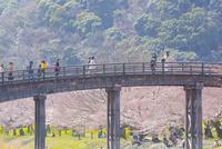 桜の錦帯橋