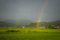 夏の田園に架かる虹