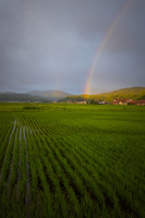 夏の田園に架かる虹 10685004419| 写真素材・ストックフォト・画像・イラスト素材|アマナイメージズ