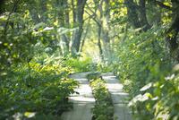 八島ヶ原湿原の遊歩道