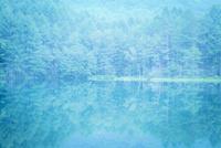 御射鹿池の水面に反映する新緑の木々