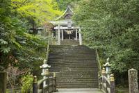国造神社 10685004497| 写真素材・ストックフォト・画像・イラスト素材|アマナイメージズ
